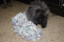 wildlife blanket